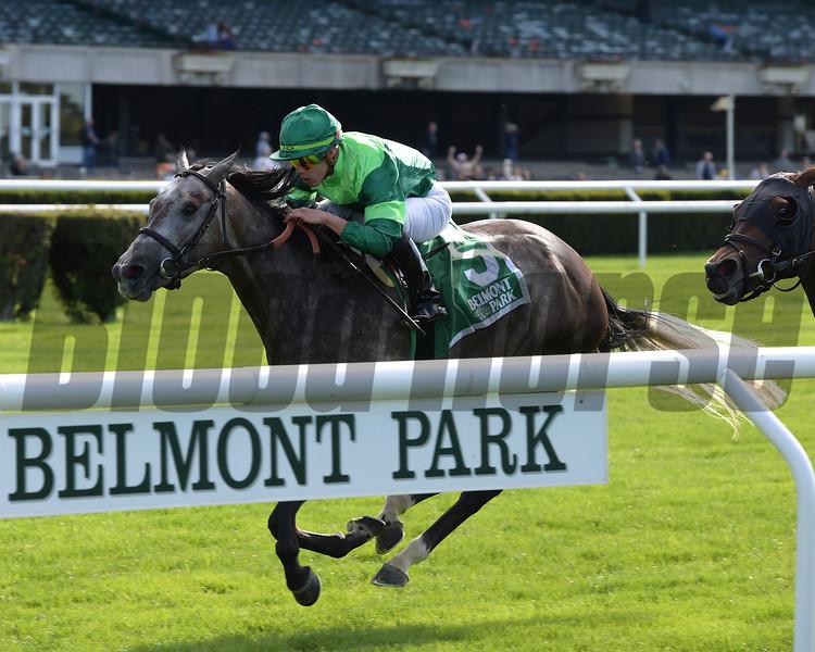 Homerique wins the 2019 Beaugay at Belmont Park<br /> Coglianese Photos/Joe Labozzetta
