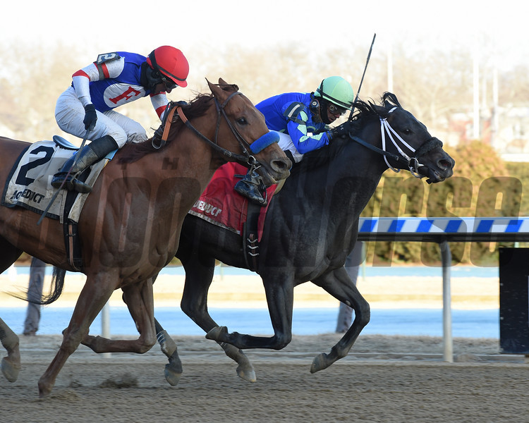Honor Up wins the Haynesfield Stakes at Aqueduct Sunday, February 17, 2019. Photo: Coglianese Photos/Elsa Lorieul