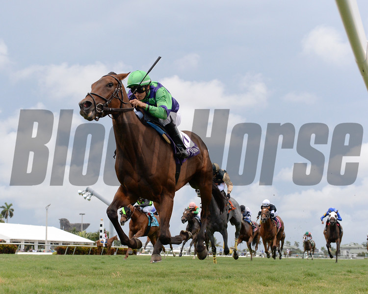 Vow to Recover wins the Honey Ryder Stakes Saturday, May 5, 2019 at Gulfstream Park. Photo: Coglianese Photos/Lauren King