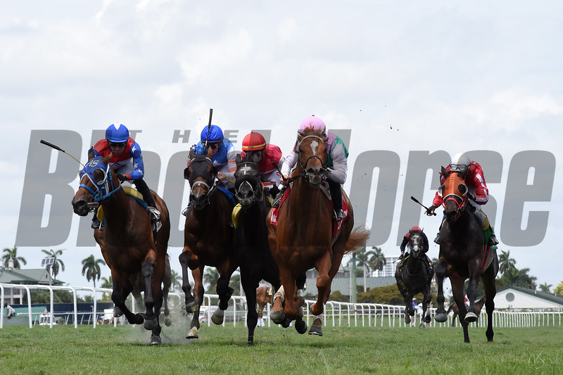 Seismic Wave wins the 2019 Cutler Bay Stakes at Gulfstream Park<br /> Coglianese Photos