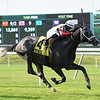 Pole Setter wins the 2019 Paradise Creek Stakes at Belmont Park<br /> Coglianese Photos/Susie Raisher