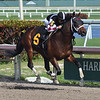 Global Campaign - Maiden Win, Gulfstream Park, January 5, 2019<br /> Coglianese Photos/Lauren King