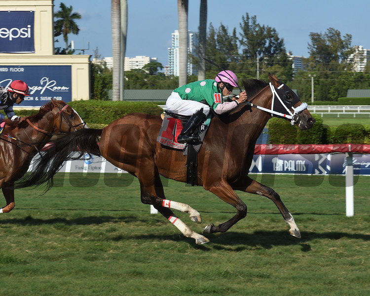 Salute the Colonel wins the Home of the Brave Stakes Monday, May 27, 2019 at Gulfstream Park. Photo: Coglianese Photos/Lauren King