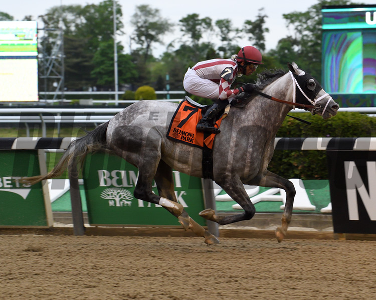 Marconi wins the 2019 Flat Out Stakes at Belmont Park. Photo: Coglianese Photos