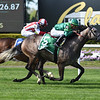 Homerique wins the 2019 Beaugay at Belmont Park<br /> Coglianese Photos/Derbe Glass