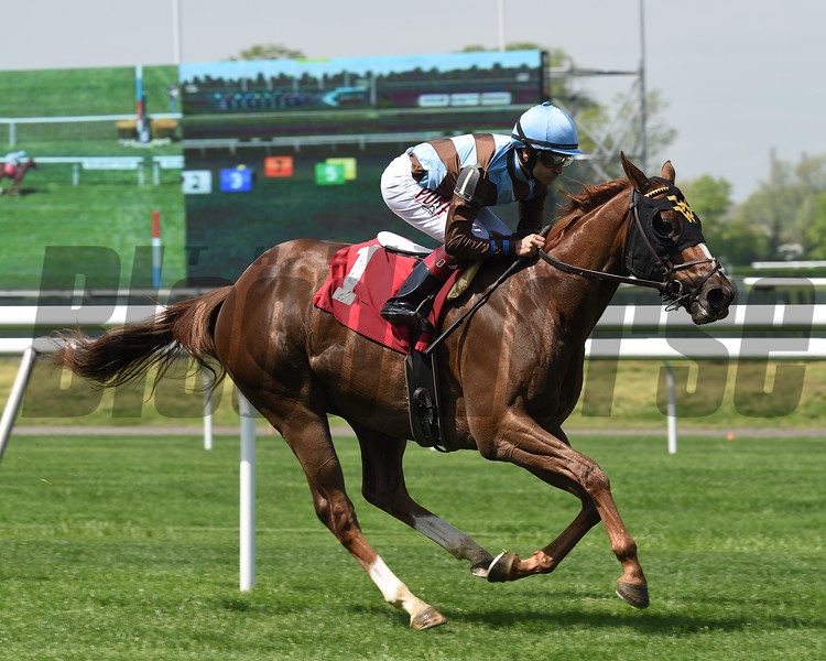 Foolish Humor - Maiden Win, Belmont Park, May 2, 2019<br /> Coglianese Photos/Susie Raisher