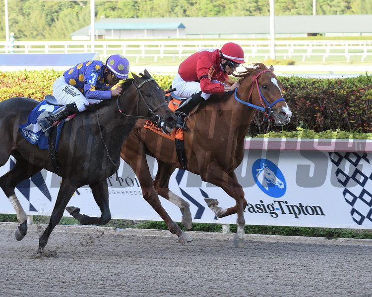 Gladiator King wins the 2019 Roar Stakes at Gulfstream Park<br /> Coglianese Photos/Lauren King