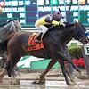 Nicodemus wins the 2019 Westchester Stakes<br /> Coglianese Photos