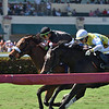 Holy Helena wins the 2019 The Very One at Gulfstream Park<br /> Coglianese Photos/Lauren King