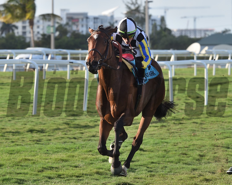 Santa Monica wins the 2019 Orchid Stakes at Gulfstream Park<br /> Coglianese Photos/Derbe Glass