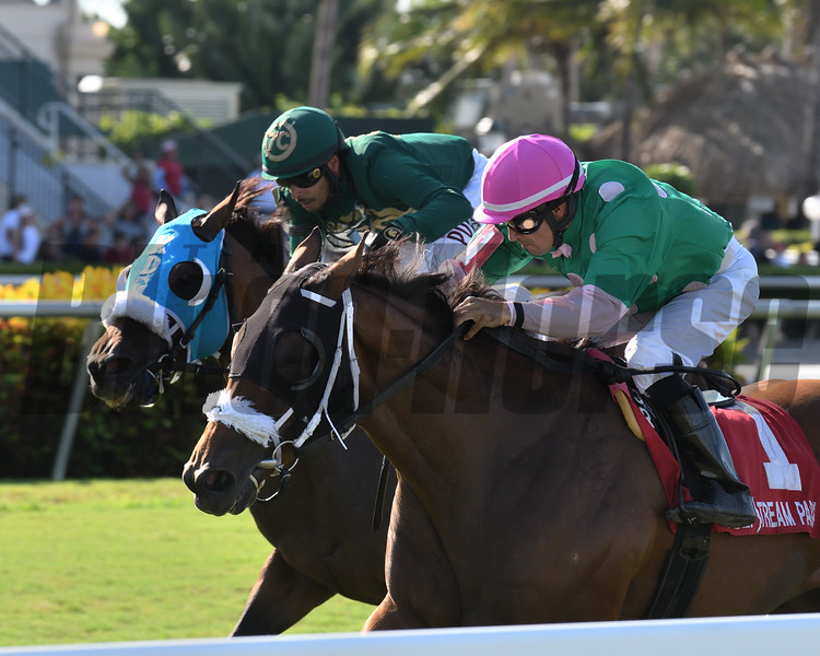 Salute the Colonel wins the 2019 Richard Henry Lee Stakes<br /> Coglianese Photos/Ryan Thompson