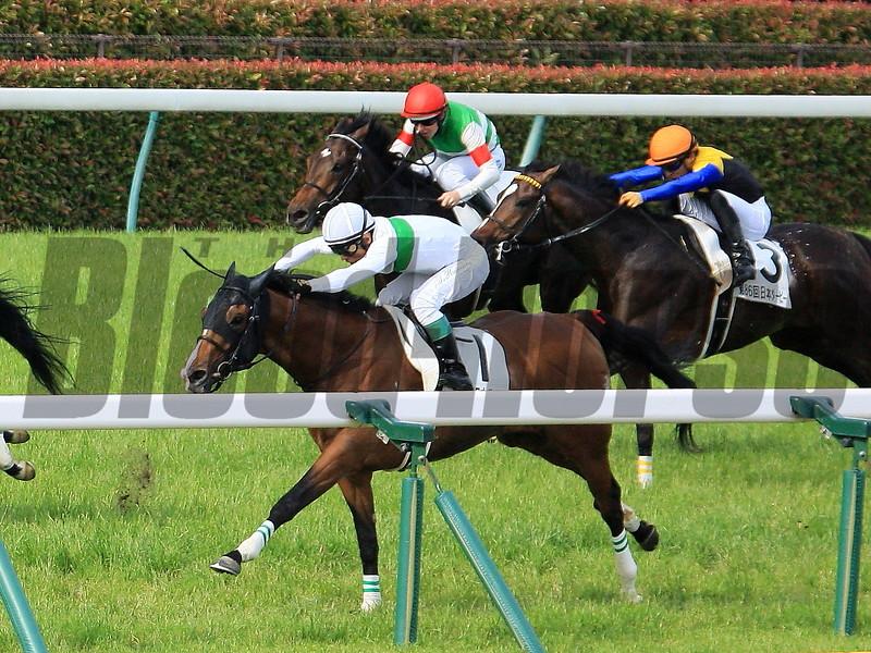 Roger Barows (JPN) wins 2019 Tokyo Yushun (Japanese Derby). Photo: Naoji Inada