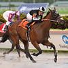 Lady's Island wins the 2019 Bob Umphrey Turf Sprint Stakes at Gulfstream Park<br /> Coglianese Photos