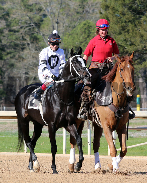 Long Range Toddy with Jon Court Post Parade The Rebel (GII) (1st Divison) Oaklawn Park March 16, 2019 Photo by: Chad B. Harmon