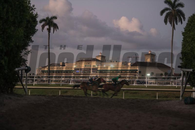Morning  @ Gulfstream Park   Jan 19 2019<br />       ©JoeDiOrio/Winningimages.biz