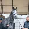 Takanori Kikuzawa. trainer & Aerolithe groom Toshihiro Kitabayashi  .   @ Gulfstream Park. Jan 20th 2019<br /> ©JoeDiOrio/Winningimages.biz