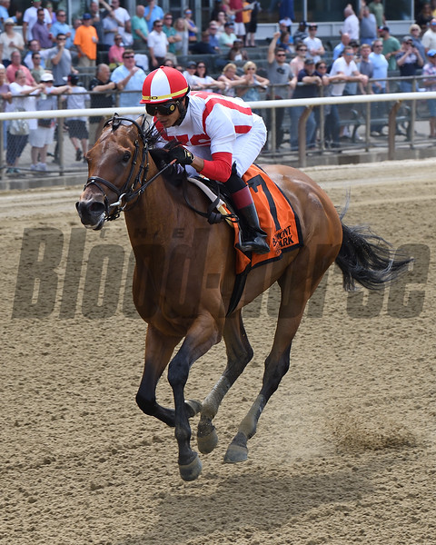 Separationofpowers wins the 2019 Bed o' Roses Invitational Stakes at Belmont Park<br /> Coglianese Photos/Chelsea Durand