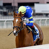 Its All Relevant wins the 2019 Dads Caps Stakes at Aqueduct<br /> Coglianese Photos/Elsa Lorieul