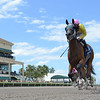 A Bit of Both wins the 2019 Game Face Stakes at Gulfstream Park<br /> Coglianese Photos/Leslie Martin