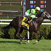 Break Even wins the 2019 Coronation Cup Stakes at Saratoga<br /> Coglianese Photos/Susie Raisher