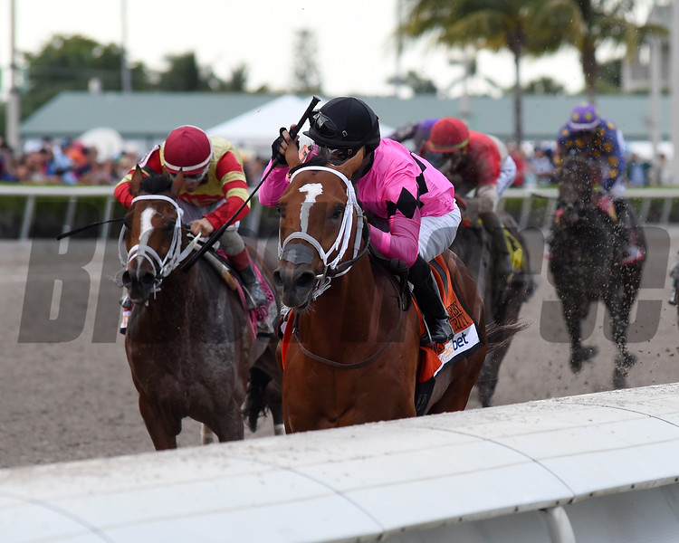 Maximum Security  wins the 2019 Florida Derby<br /> Coglianese Photos/Derbe Glass