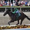 Quijote wins the 2019 Sunshine Millions Sprint Stakes at Gulfstream Park<br /> Coglianese Photos/Lauren King