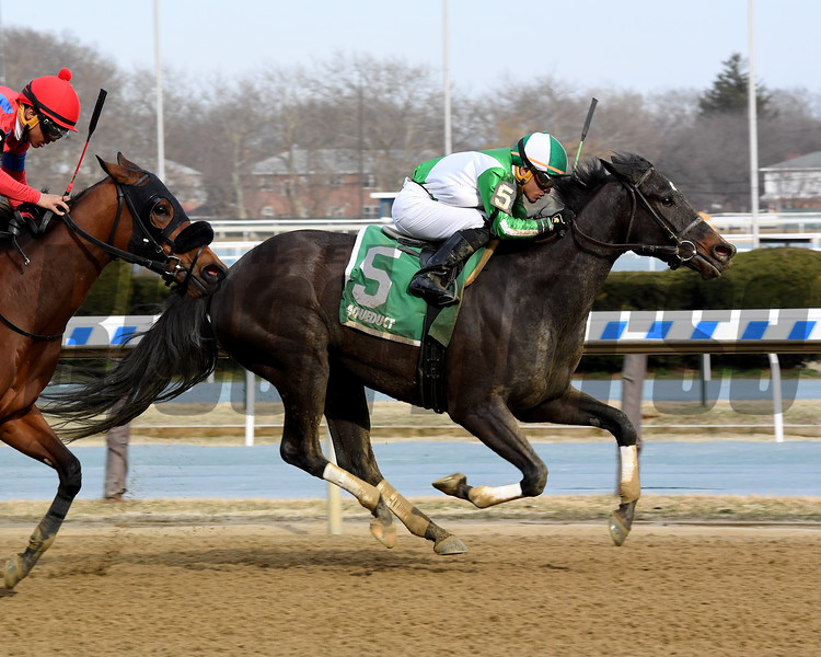 No Deal wins the 2019 Xtra Heat Stakes at Aqueduct<br /> Coglianese Photos/Chelsea Durand