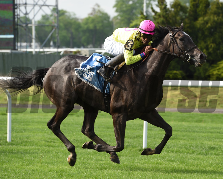 Olympico wins the 2019 Fort Marcy Stakes<br /> Photo: Coglianese Photos/Elsa Lorieul