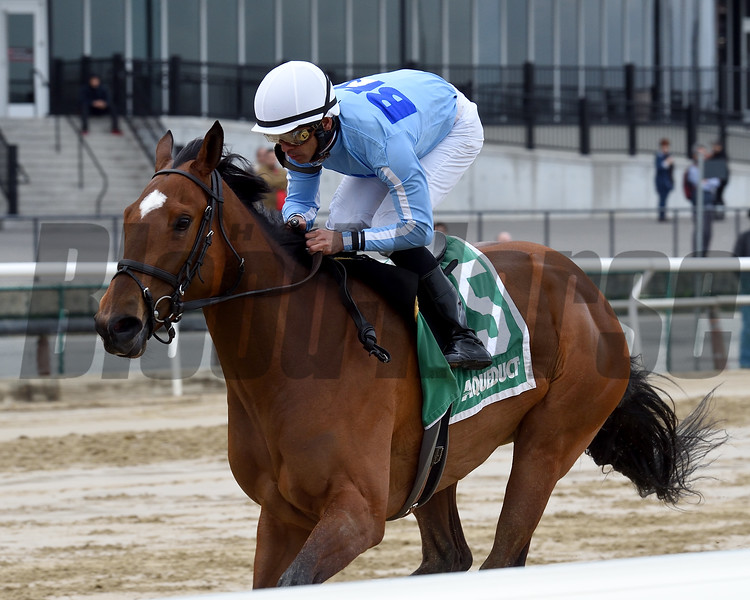 Newly Minted wins the New York Stallion Stakes Saturday, April 20, 2019 at Aqueduct. Photo: Coglianese Photos/Chelsea Durand
