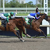 Champagne Anyone wins the 2019 Gulfstream Park Oaks<br /> Coglianese Photos/Leslie Martin