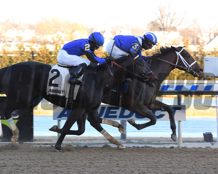 Haikal wins the 2019 Jimmy Winkfield Stakes at Aqueduct<br /> Coglianese Photos