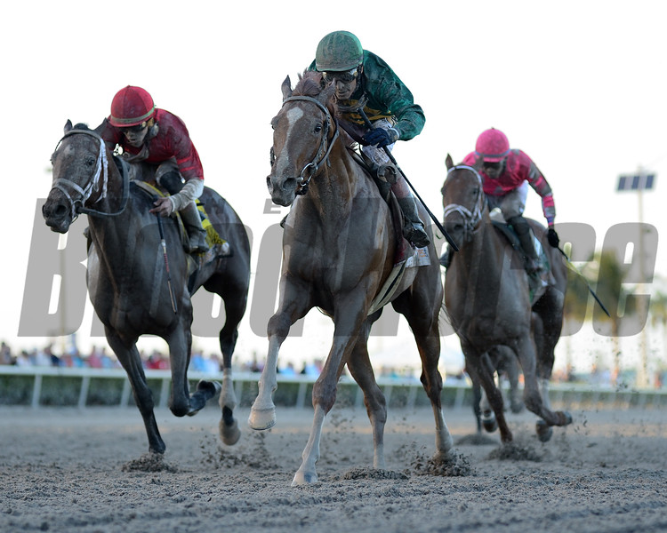 Code of Honor wins the 2019 Fountain of Youth Stakes at Gulfstream Park. Photo: Coglianese Photos