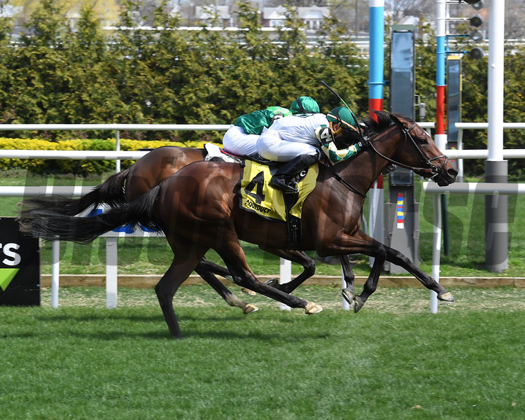 Feel Glorious wins the 2019 Memories Of Silver Stakes at Aqueduct<br /> Coglianese Photos