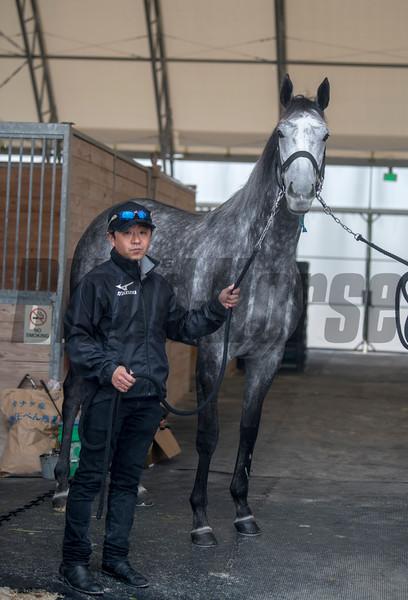 Takanori Kikuzawa. trainer & Aerolithe  .   @ Gulfstream Park. Jan 20th 2019<br /> ©JoeDiOrio/Winningimages.biz