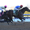 Workaholic wins the 2019 Cicada Stakes at Aqueduct<br /> Coglianese Photos/Chelsea Durand