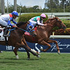 Seismic Wave wins the 2019 Cutler Bay Stakes<br /> Coglianese Photos/Leslie Martin