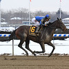 Royal Albert Hall wins the 2019 Bernardini Stakes at Aqueduct<br /> Coglianese Photos/Chelsea Durand