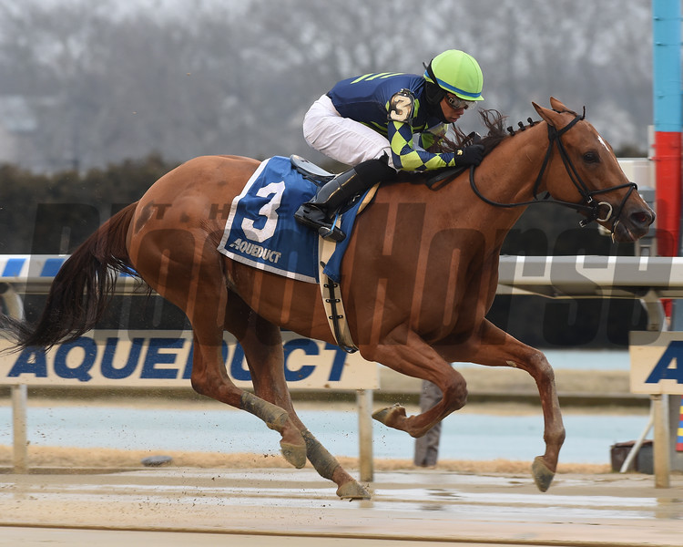 Divine Miss Grey wins 2019 Heavenly Prize Stakes at Aqueduct. Photo: Coglianese Photos