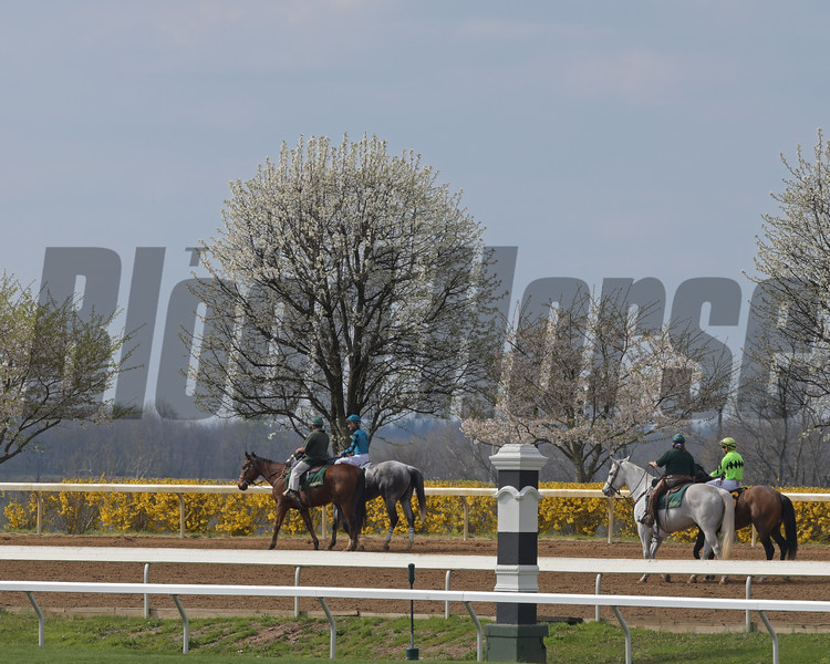 Horses going to post on April 6, 2019.