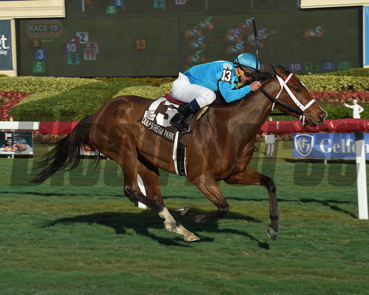 Starship Jubilee wins the 2019 Sunshine Millions Filly and Mare Turf at Gulfstream Park<br /> Coglianese Photos/Leslie Martin
