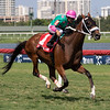 Salute the Colonel wins the 2019 Copingaway Stakes at Gulfstream Park<br /> Coglianese Photos/Nicole Thomas