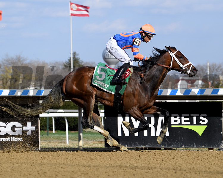 Always Shopping wins the 2019 Gazelle Stakes at Aqueduct<br /> Coglianese Photos/Viola Jasko
