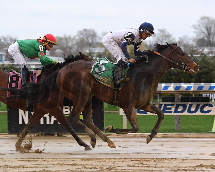 Funny Guy wins the New York Stallion Stakes Saturday, April 20, 2019 at Aqueduct. Photo: Coglianese Photos/Susie Raisher