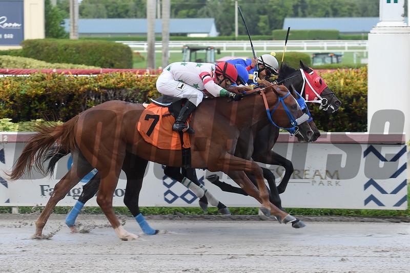 Northbrook (white cap) breaks his maiden at Gulfstream Park July 13, 2019 (dead heat for third between Venezuelan and Mr. Cesco). Photo: Coglianese Photos/Lauren King