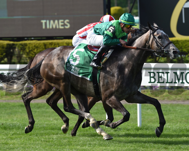Homerique wins the 2019 Beaugay at Belmont Park<br /> Coglianese Photos