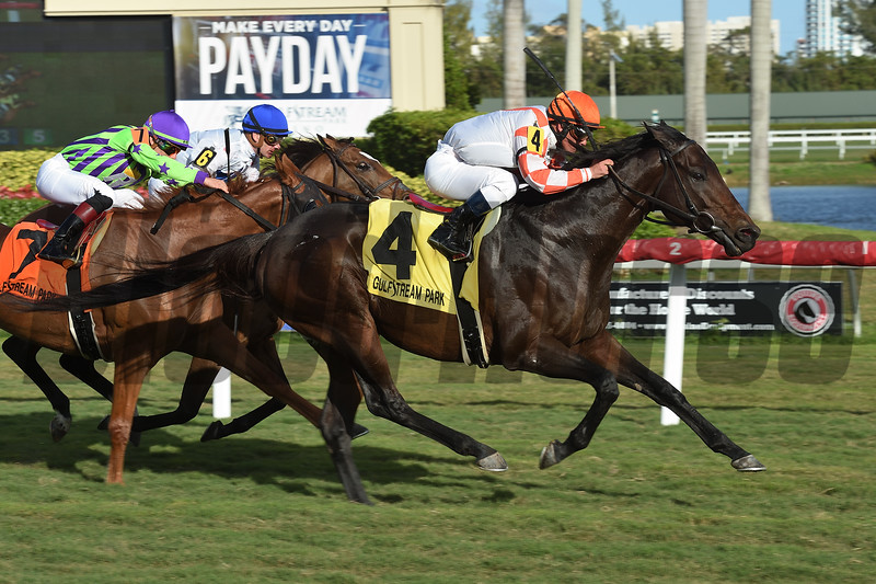 Doctor Mounty wins the 2019 Tropical Turf Stakes (G3T) at Gulfstream Park<br /> Coglianese Photos/Leslie Martin