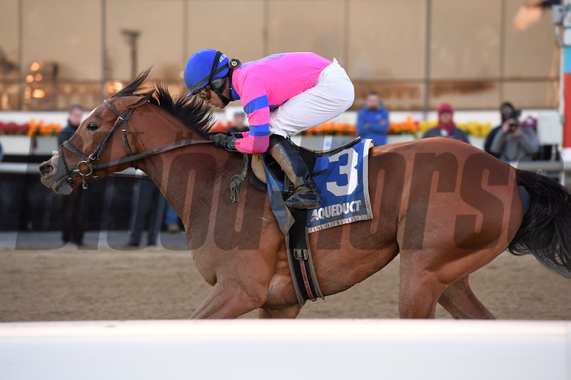 Holiday Disguise wins the 2019 Broadway Stakes at Aqueduct<br /> Coglianese Photos/Joe Labozzetta