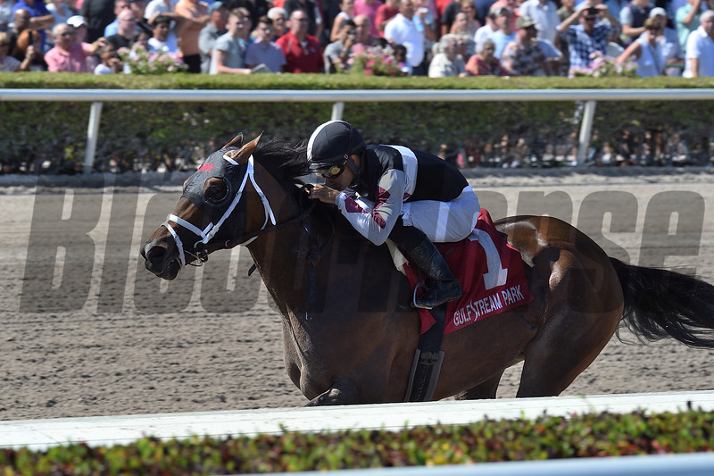 Recruiting Ready wins the 2019 Gulfstream Park Sprint Stakes<br /> Coglianese Photos/Lauren King