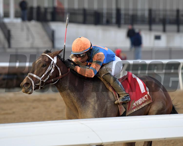 Always Shopping wins 2019 Busanda Stakes at Aqueduct Sunday, February 3, 2019. Photo: Coglianese Photos/Joe Labozzetta