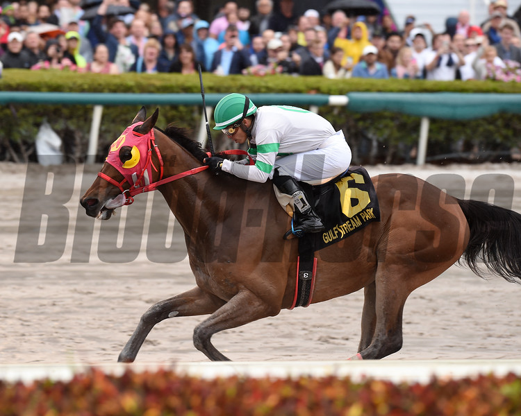 Aztec Sense wins the 2019 Fred W. Hooper Stakes at Gulfstream Park<br /> Coglianese Photos/Lauren King